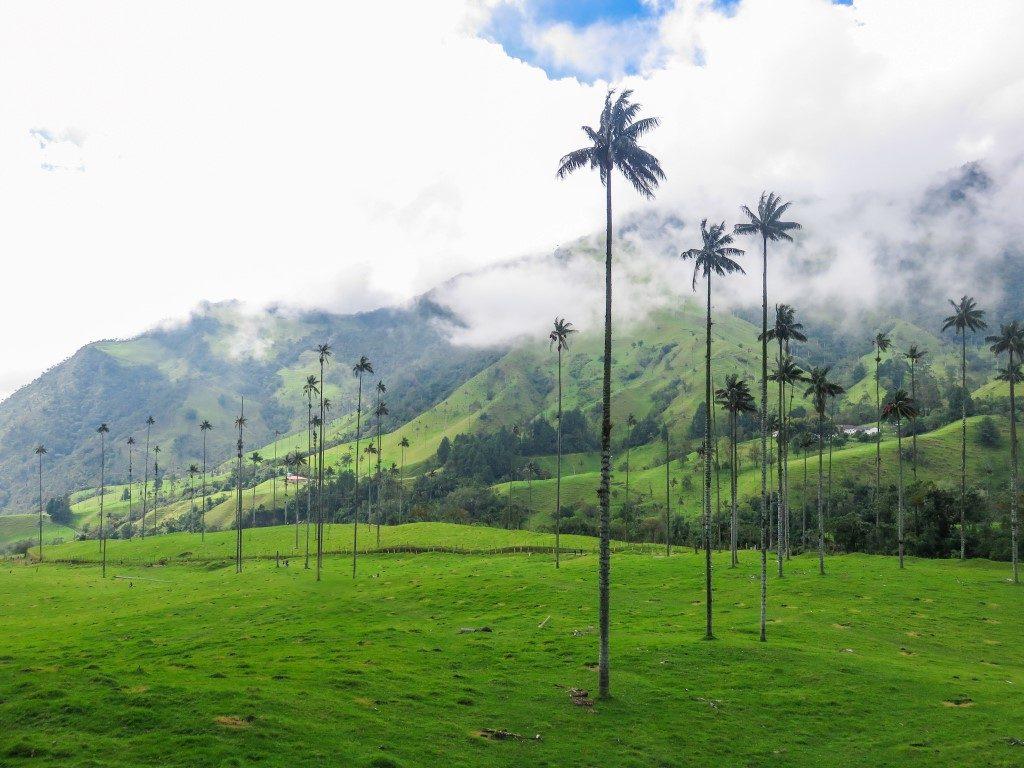 Valle del Cocora en Salento