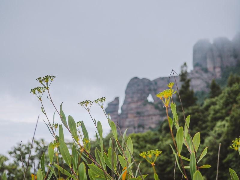 Camino-a-la-foradada-de-Montserrat